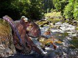 Freshwater Octopus