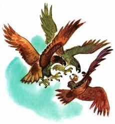 Three eagles fight VL