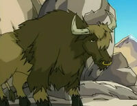 Noble yak