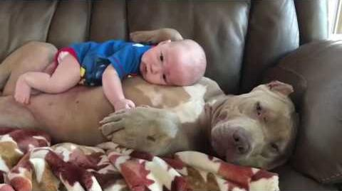 Baby on a Doggie!