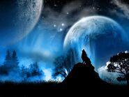 8800 1 miscellaneous digital art wolf