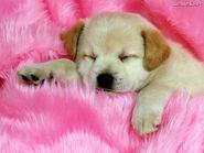 Sleeping-the-Day-Away