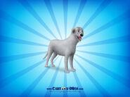Irishwolfhound1600x1200