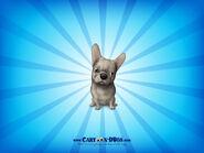 Frenchbulldogbuff1600x1200