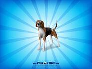 Americanfoxhound1600x1200