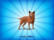Australiancattledog1600x1200