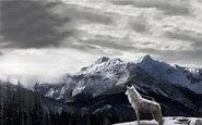 Wolf in bergen