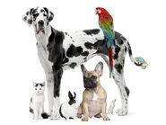The-best-top-desktop-dog-wallpapers-51-hd-dog-wallpaper-picture-image