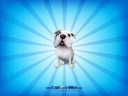 Englishbulldog1600x1200