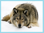 Hundeähnliche Tiere mit Rand
