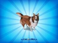 Shetlandsheepdog1600x1200