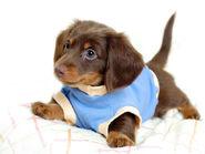The-best-top-desktop-dog-wallpapers-55-hd-dog-wallpaper-picture-image