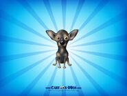 Chihuahuablackbrown1600x1200