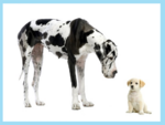 Hunderassen mit Rand