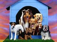 The-best-top-desktop-dog-wallpapers-08