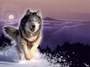 Wolf-Wallpaper-Running