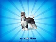 Afghanhound1600x1200