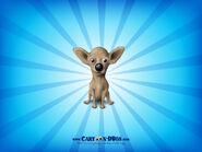 Chihuahuabuff1600x1200