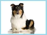 Hunde-Lexikon mit Rand