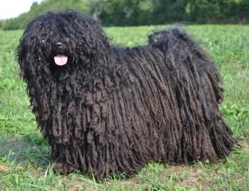 Wollknäuel Hund