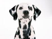 The-best-top-desktop-dog-wallpapers-39