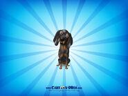 Blackandtancoonhound1600x1200