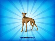 Greyhound1600x1200