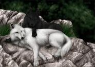 Schw,+weißer wolf