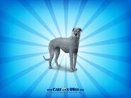 Scottishdeerhound1600x1200