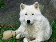 A polarwolf03