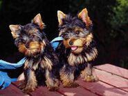 Hunde 24 001