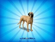 Mastiff1600x1200
