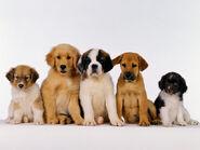 The-best-top-desktop-dog-wallpapers-32