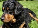 Mein Hund : Lola