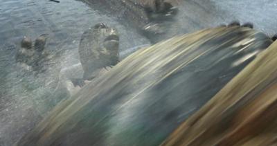 Tortoise John's Death