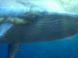 Whale (Finding Nemo)