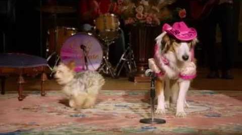 Broken Hearted (Pup Star)