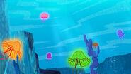 Jellyfish-Starfish Serenade