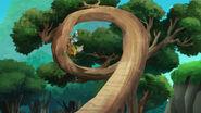 Old Twisty Tree-Race-Around Rock03