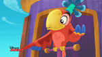 Wise Old Parrot-Birds of a Feather03
