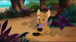 Patch -The Pirate Pup10