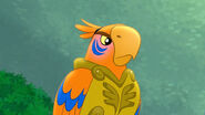 Eagle Eye-Flight of the Feather04