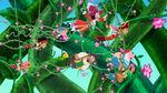 Groupshot-Hook's Playful Plant!15