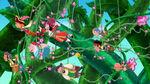 Groupshot-Hook's Playful Plant!06