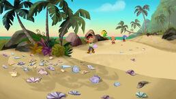 Jake&crew Sea Shell Beach
