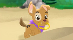 Patch the Pirate Pup13