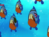 Pirate Piranhas