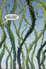 Dragonvine roślina