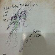 Plankenteenie planktonowiec