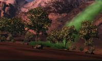 Smoczy korzeń plantacja2